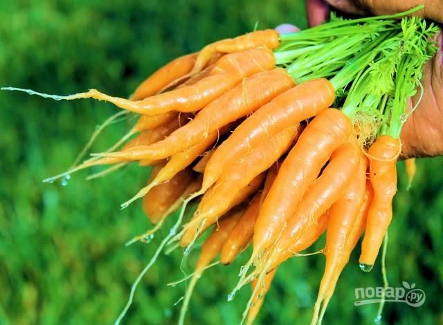 1. Морковь вымойте как следует и обсушите. В данном случае используется вот такая маленькая молодая морковь, поэтому ее можно глазурировать целиком. Обычную крупную морковку можно нарезать кружочками.