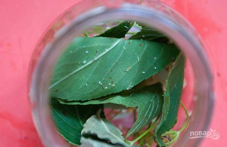 Банки для огурцов простерилизуйте. Листья винограда промойте и высушите. Выложите их на дно банки. Также вы можете заменить их на листья вишни или смородины.