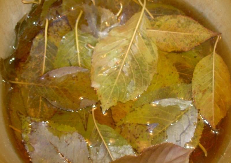 Начнем мы с того, что промоем тщательно листья вишни, зальем их холодной водой и поставим на огонь. После того как жидкость закипит, огонь выключаем, а листья оставляем на сутки настаиваться.