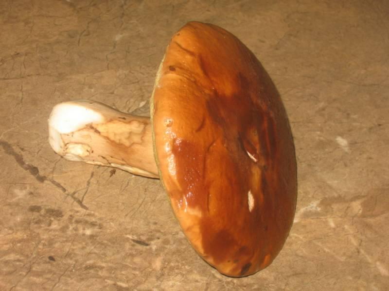 Итак, для начала мы очищаем грибы от мусора и тщательно промываем их под проточной водой.