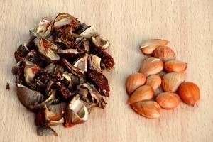 2. Я обычно мою и косточки, затем обсушиваю их также как и плоды. Лучше брать более крупные абрикосы.