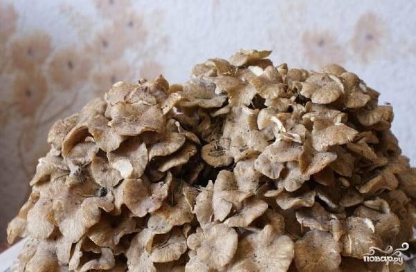1. Для приготовления грибного соуса грибы при необходимости измельчайте, промывайте обычной водой, варите в кипятке около пятнадцати минут, после чего смело откидывайте на дуршлаг. Возьмите большую луковицу и порежьте ее на небольшие кусочки. Для макарон поставьте на плиту кастрюлю с водой. Отварите согласно инструкции, которая указана на упаковке.