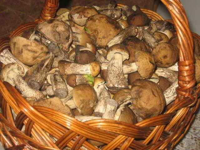 1. Лесные грибы - это лесные грибы и их вкус несравним. Попробуйте приготовить тушеные подберезовики  в домашних условиях и вы в этом убедитесь. Нам удалось раздобыть целое лукошко. Для начала я замочила их на полчаса, после чего тщательно вымыла и отправила вариться на 45 минут в подсоленную воду.