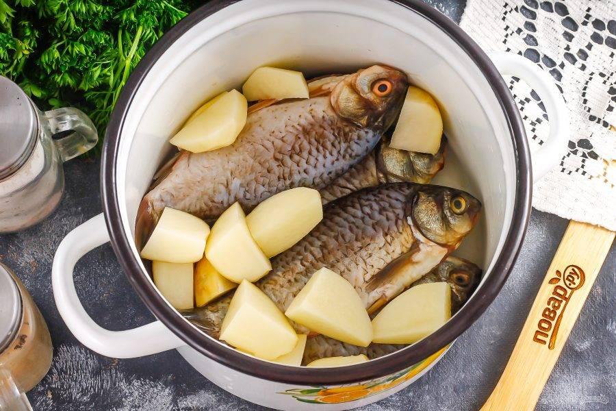 Очищенную рыбу выложите в кастрюлю или казан. Картофель нарежьте средними кубиками и добавьте в емкость.