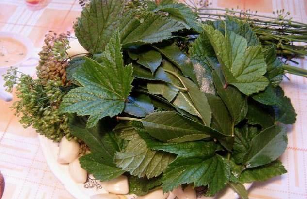 Тщательно промойте зонтики укропа, листья черной смородины и вишни, почистите зубчики чеснока и корень хрена.