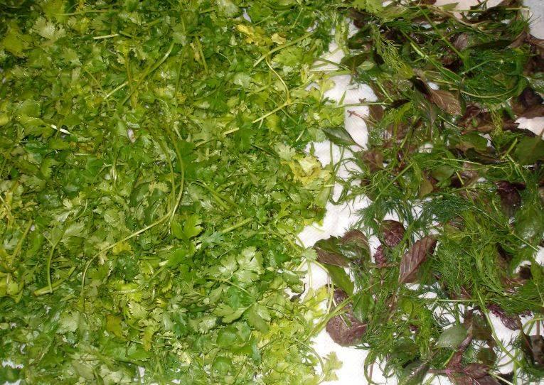 Свежую зелень хорошенько промываем и выкладываем на полотенце, чтобы она немного обсохла.