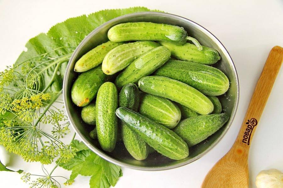 Огурцы тщательно вымойте и залейте холодной водой на 2-3 часа, чтобы они были хрустящие.