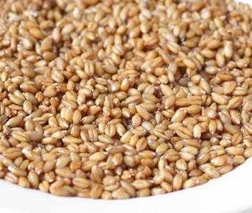 Зерна пшеницы залейте водой и дайте им настояться несколько часов. Затем воду слейте и промойте пшеницу проточной водой.