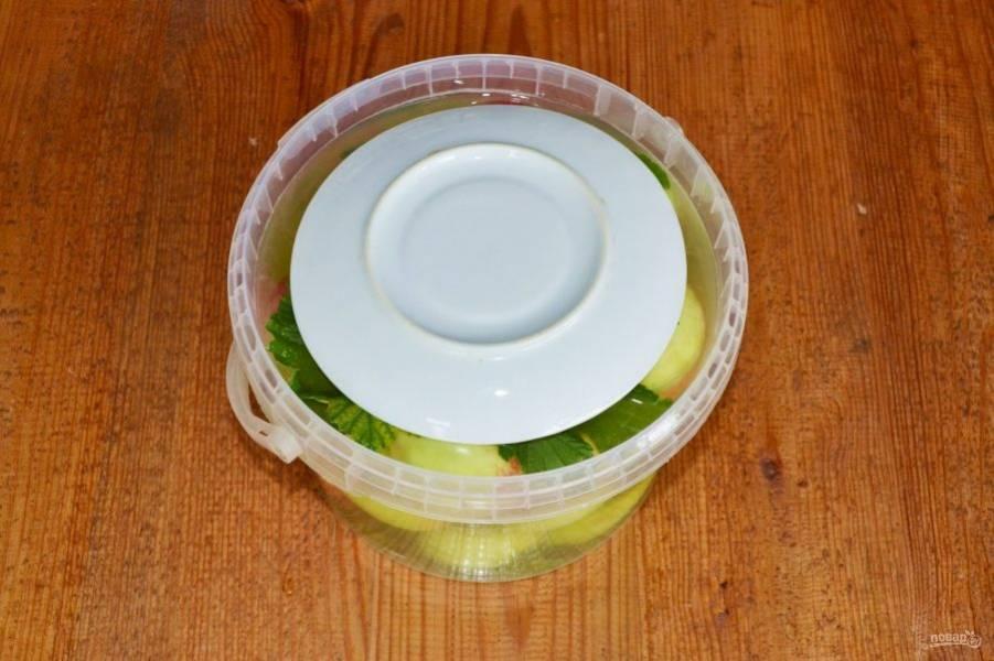 Накройте, чтобы яблоки находились в рассоле. Оставьте в тепле на 4-5 дней. По мере необходимости можно подливать оставшийся рассол. А после переместите в прохладное темное место на месяц-два.