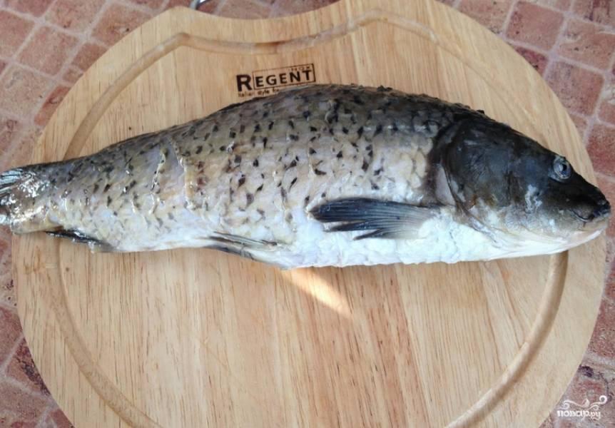 Тщательно промойте сазана под холодной водой. Затем очистите и выпотрошите рыбу.