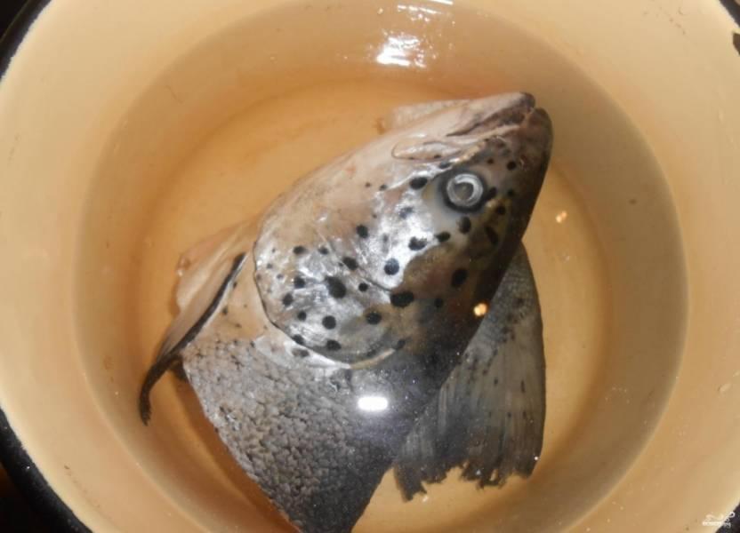 1.Прежде всего рыбу тщательно очищаем от чешуи и моем. Бросаем кусочки рыбы в кастрюлю, ставим последнюю на плиту.