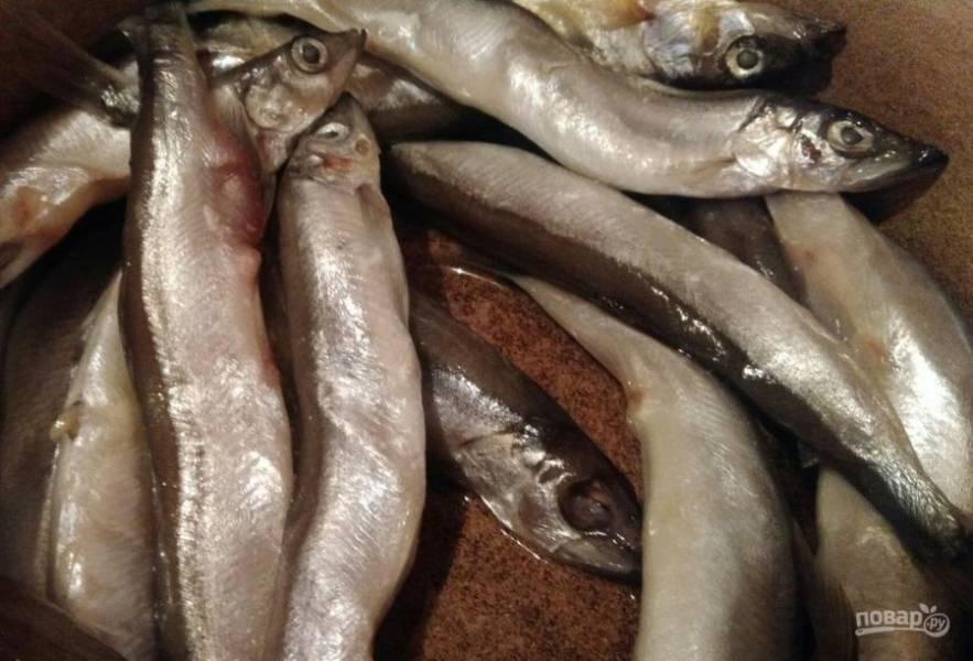 1. Эта маленькая известная всем рыбка семейства корюшковых — отличная альтернатива любой морской рыбе. Несмотря на ее стоимость, мойва не уступает по вкусу другим видам морских рыб. В ней 23% белка, она быстро жарится и очень легко усваивается. Итак, для начала нам нужно помыть и дать стечь лишней жидкости.