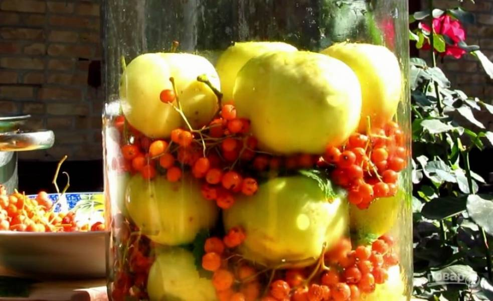 Нужно уложить слоями яблоки, рябину и листья смородины (яблоки хвостиками вверх!).