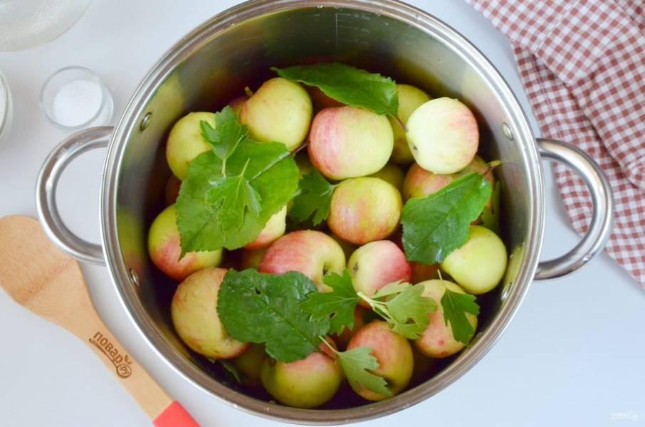 Яблоки вымойте, хвостики можно не убирать. Выложите плотно в кастрюлю или ведро, бочку. Сверху выложите оставшиеся листочки.