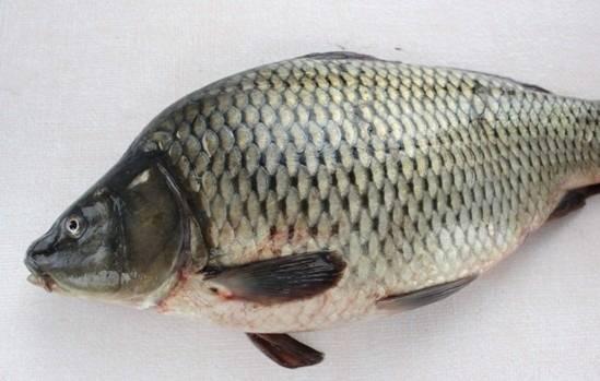 1. Рыбу можно взять любую, которая окажется под рукой.
