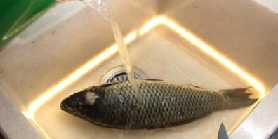 Ужин на всю семью (рыба с салатом) - фото шаг 1