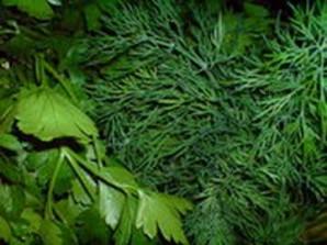 Смузи из зелени - фото шаг 2