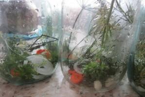 Хрустящие огурчики на зиму - фото шаг 1