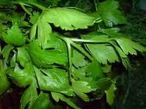 Смузи из зелени - фото шаг 3