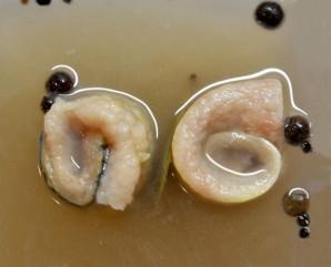 Рулетики из сельди в маринаде - фото шаг 7