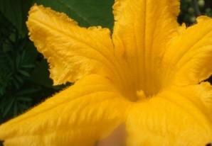 Цветы кабачков в кляре   - фото шаг 2