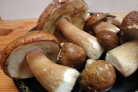 Маринованные белые грибы с чесноком