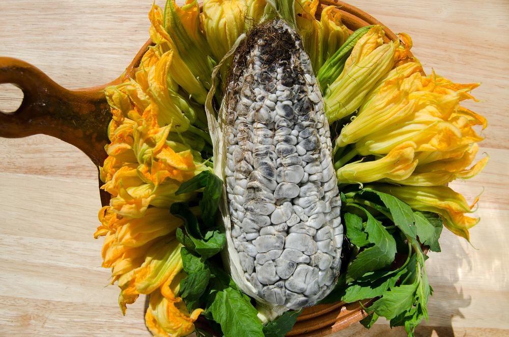 Пузырчатая головня кукурузы (мексиканский деликатес)