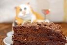Шоколадный торт за 5 минут