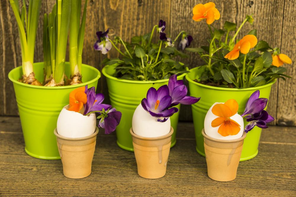 Цветы в скорлупе от яиц на Пасху
