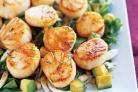 Морские гребешки с фенхелем и авокадо